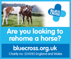 Blue Cross 2020 B (West Midlands Horse)